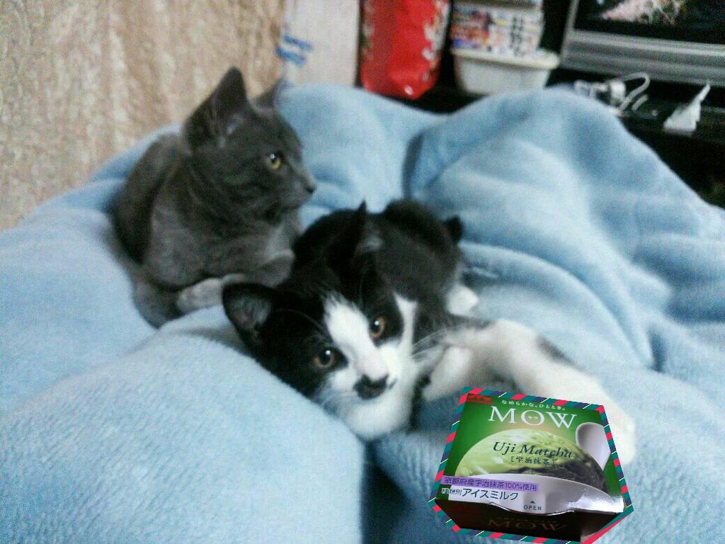 アイスと猫の写真