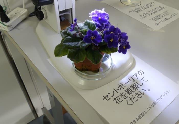 花 顕微鏡 研究