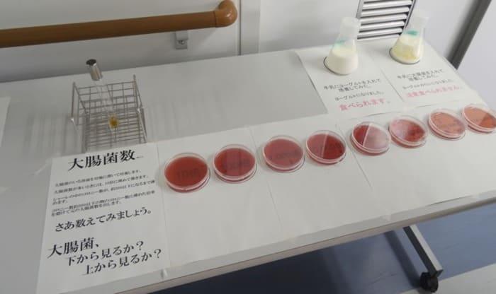 大腸菌 研究 化学